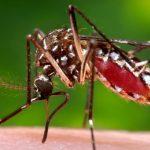 Zika Maskita
